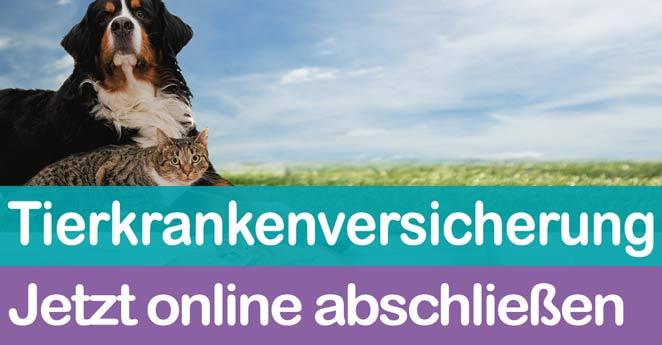 online-abschluss-tierversicherung
